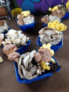 The crazy mushrooms