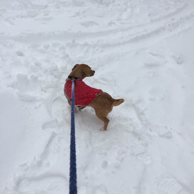 Snow Dog Baltimore