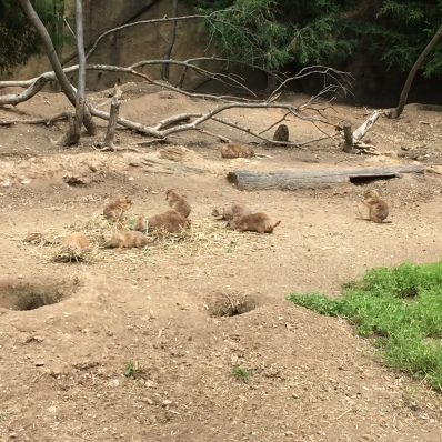 maryland zoo prairie dogs